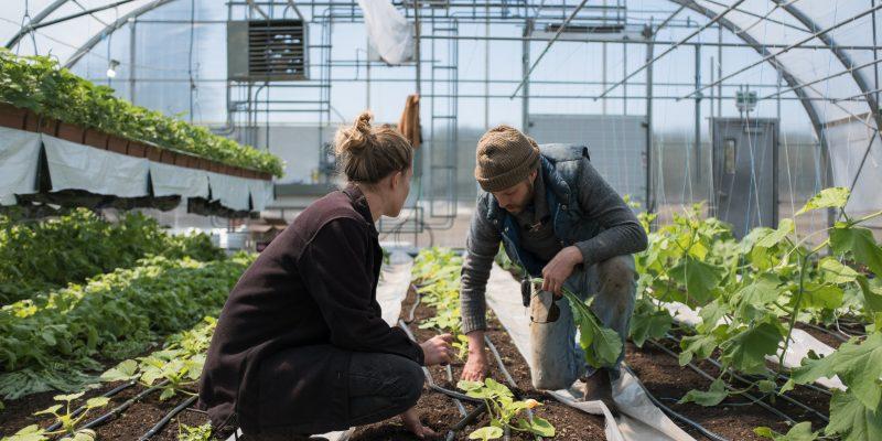 model-market-gardener-main